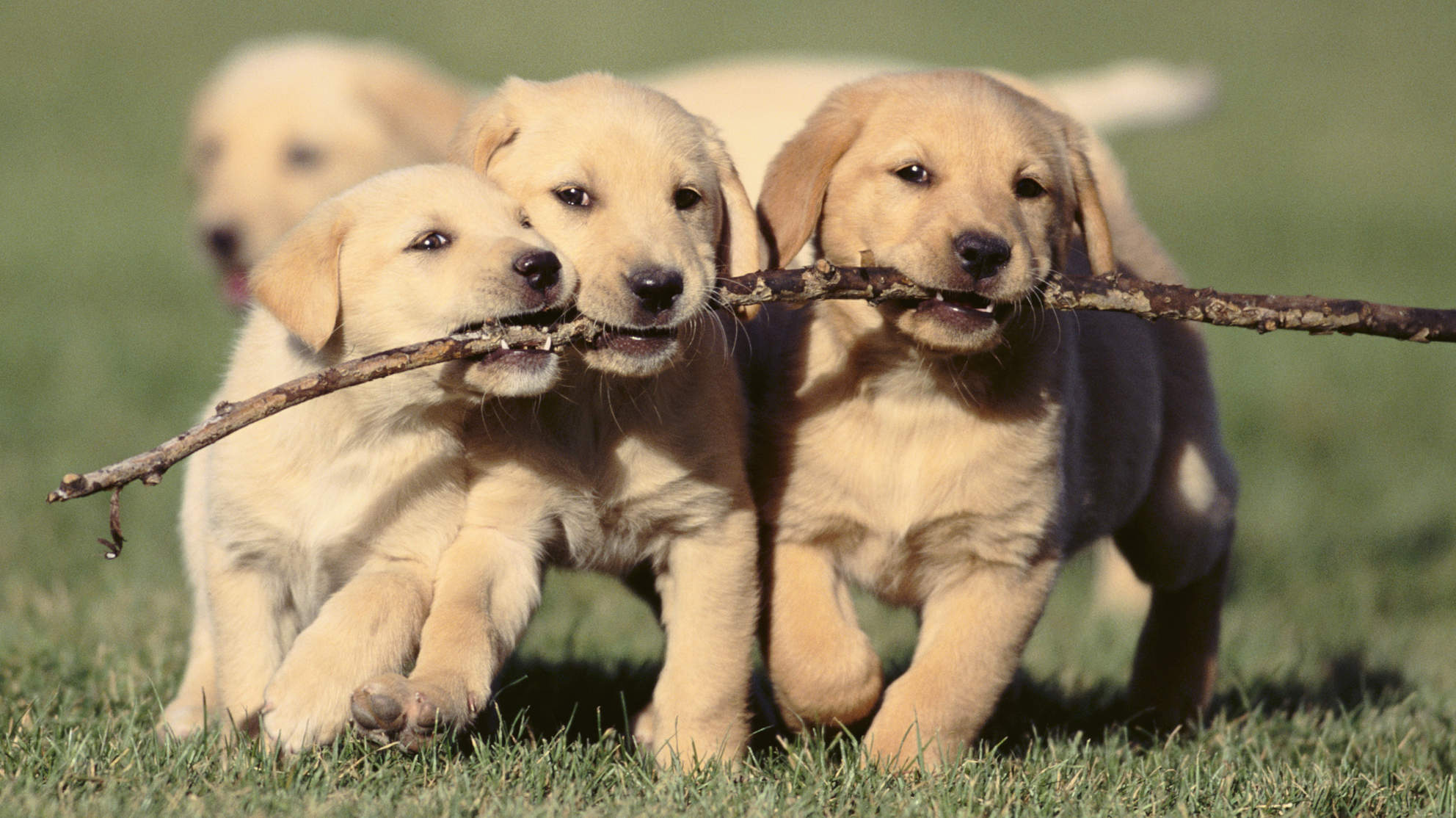 Puppies and Perks, how to keep Employees Happy